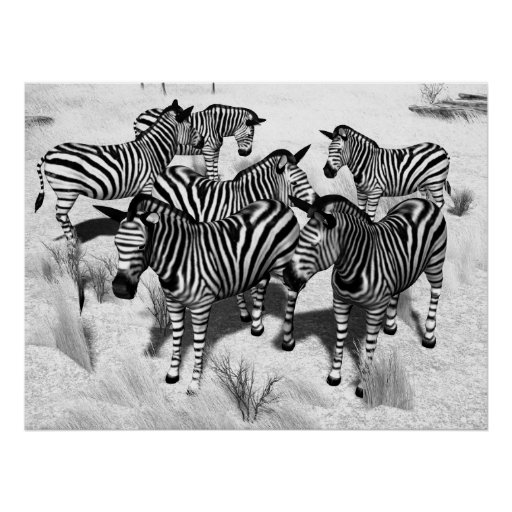Zebras in Black and White Posters
