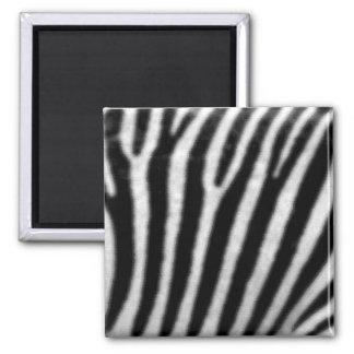 Zebras Square Magnet