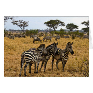 Zebras of Africa Greeting Card