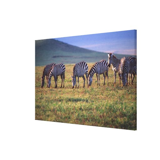 Zebras on the Serengetti Plains at Sunrise, Stretched Canvas Prints