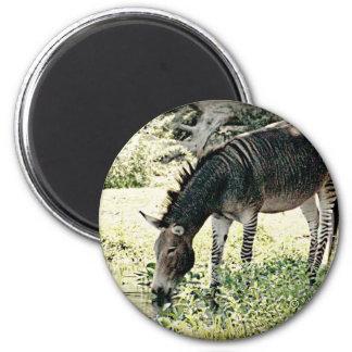 """""""Zedonk"""" 6 Cm Round Magnet"""