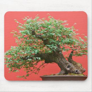 Zelkova bonsai tree mouse pad