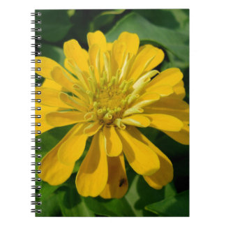 Zesty Zinnia Spiral Notebook