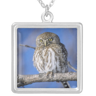 Zimbabwe. Close-up of pearl spotted owl on Square Pendant Necklace