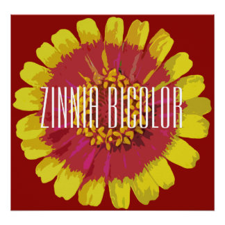 Zinnia bicolor - Canvas Poster