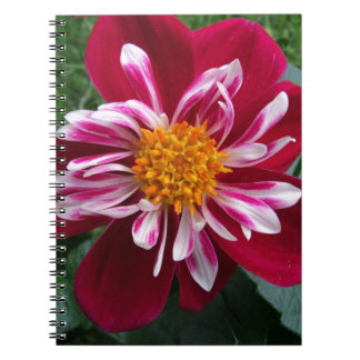 Zinnia Note Book