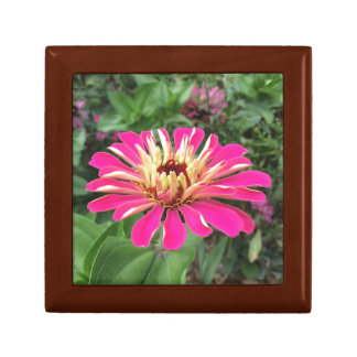 ZINNIA - Vibrant Pink and Cream Gift Box