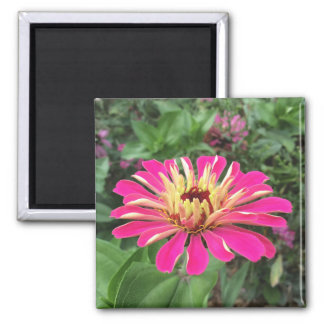 ZINNIA - Vibrant Pink and Cream - Magnet