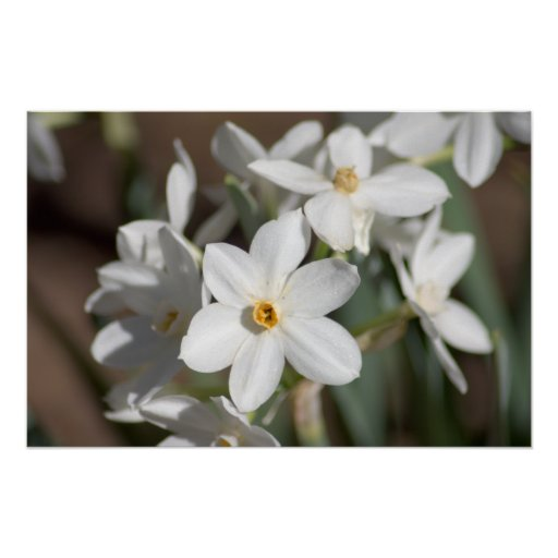 Ziva Paper White Flower Posters