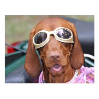 Zoe Ready to Ride Postcard