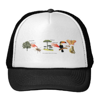 zone of the tropical bush didactic project hat
