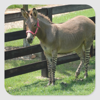 Zonkey name for part donkey and zebra square sticker