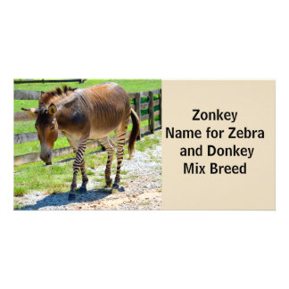 Zonkey part Zebra and Donkey Card
