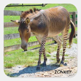 Zonkey part Zebra and Donkey Square Sticker