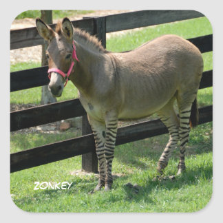 Zonkey Square Sticker