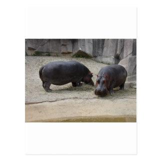 Zoo Animals Postcard