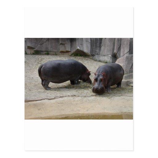 Zoo Animals Post Card