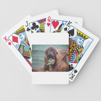 zoo bicycle playing cards