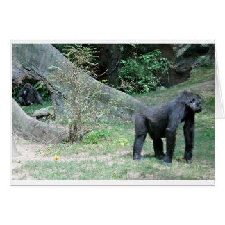Zoo Gorilla Animal Card