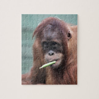 zoo jigsaw puzzle