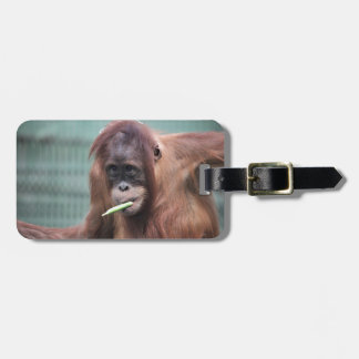 zoo luggage tag