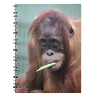 zoo notebook