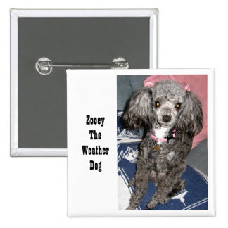 Zooey with bows, Zooey The Weather Dog 15 Cm Square Badge
