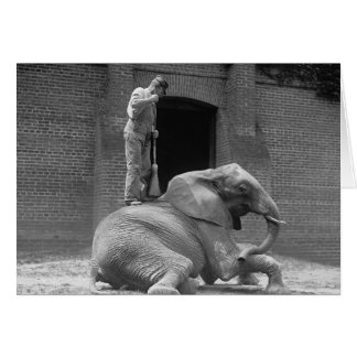 Zookeeper Sweeping an Elephant, 1922 Card