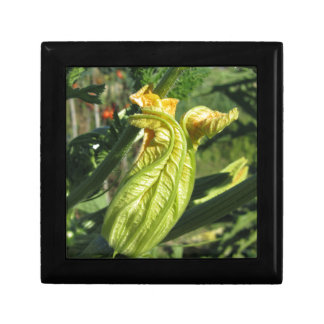 Zucchini plant in blossom in the vegetable garden gift box