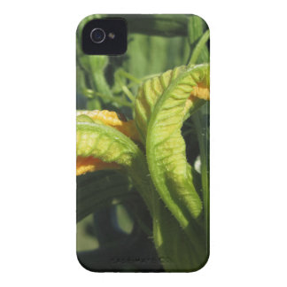 Zucchini plant in blossom in the vegetable garden iPhone 4 Case-Mate case