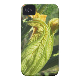 Zucchini plant in blossom in the vegetable garden iPhone 4 cover