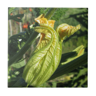 Zucchini plant in blossom in the vegetable garden small square tile