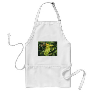 Zucchini plant in blossom in the vegetable garden standard apron