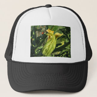 Zucchini plant in blossom in the vegetable garden trucker hat