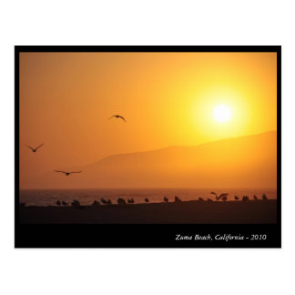 Zuma Beach, California Postcard